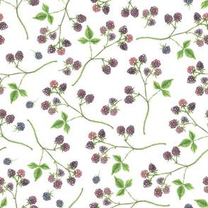 Blackberry watercolor pattern