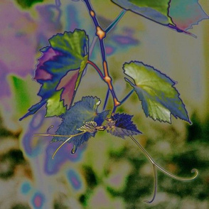 grape tendril  purple green