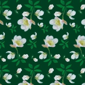 christmas_rose_green