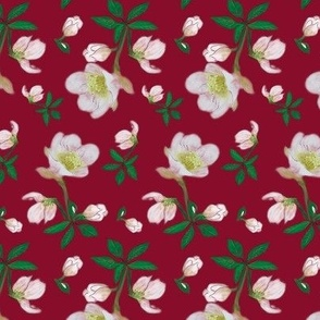 christmas_rose_pink