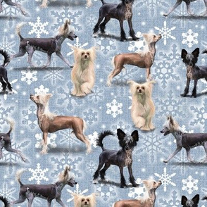 The Chinese Crested Christmas Dog