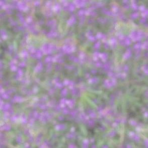 Lavender Blue Salvia Light Blur