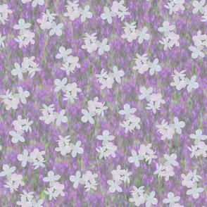 Hydrangeas over Lavender Blue Salvia Blurred Background