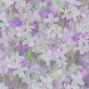 Soft Hydrangeas over Salvia Blurred Background