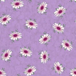 Pink White Echinaceas on Lavender