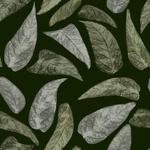 Leaves on dark green
