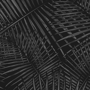 Black and White Palm Fronds