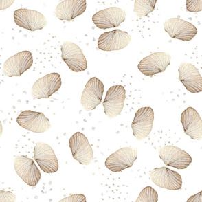 Angel Wing Seashells with Sand