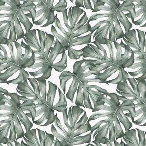 Floral / Modern Oasis