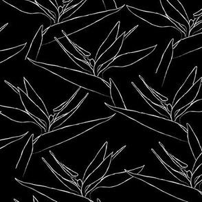 SMALL freehand birds - black & white of paradise - black