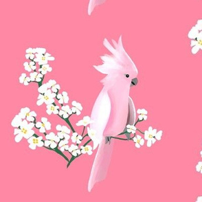 Cockatoo and Blossoms on pink