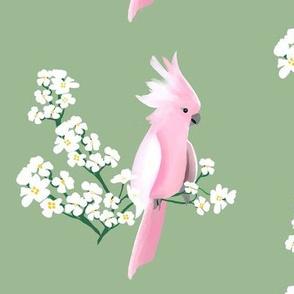 Cockatoos and Blossoms on Sage