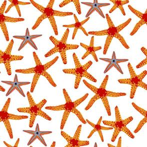 star fish on white