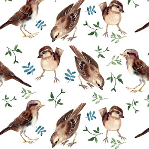 SPARROW AND more GREEN