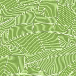 Banana Palm Leaves_Greenery_100%Size