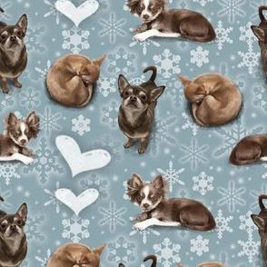 The Christmas Chihuahua
