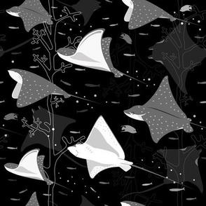 Flying stingrays black