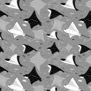 Flying stingrays gray