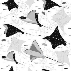 Flying stingrays black and white
