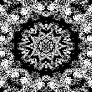 Kaleidoscope with Black Background