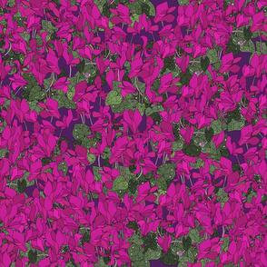 Cyclamen on purple