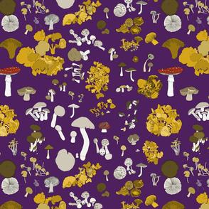 Fungi on purple