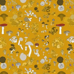 Fungi on mustard
