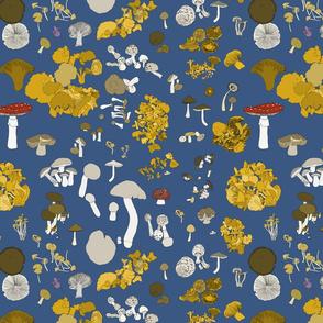 Fungi on mid blue