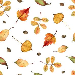 Orange Leaves (on white)