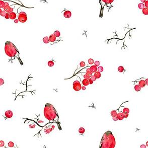 Bullfinch_on_rowanberry