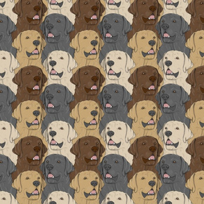 Labrador Retriever portrait pack