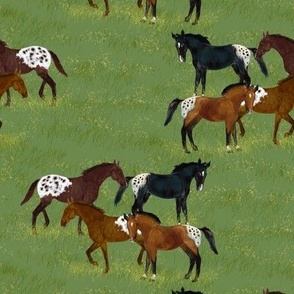 Blanketed Appaloosa Herd at Pasture