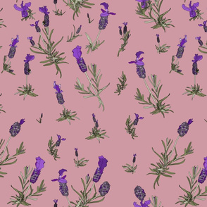 Lavender on dusky pink