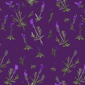 Lavender on purple