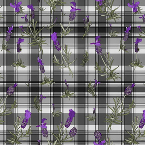 Lavender on plaid