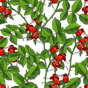 Dog Roses Berries on White