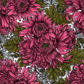 Pink chrysanthemum flowers