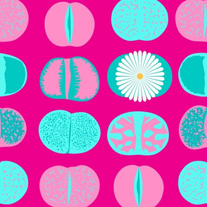 Lithops (Pink)