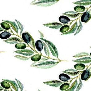 Olive branches watercolor