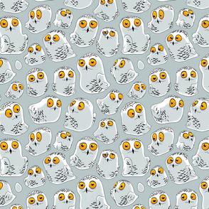 Cute snowy owls