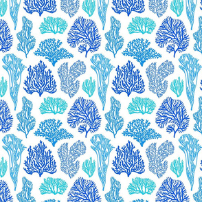 Blue corals on white background