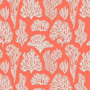 Coral shapes on living coral