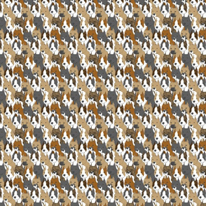 Small American Staffordshire Terrier portrait pack
