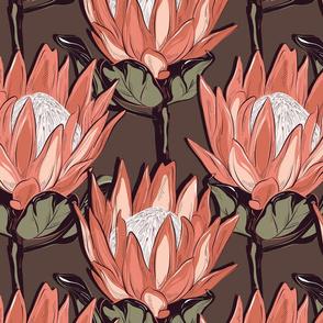 Queen Protea in orange