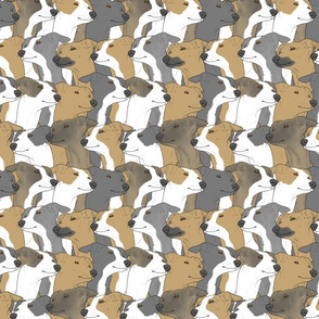 Italian Greyhound portrait pack