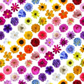 Floral Rainbow Lattice