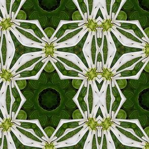 White Hosta Ribbons Kaleidoscope