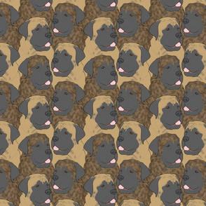 Mastiff portrait pack