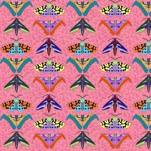 Moth Medley on Pink