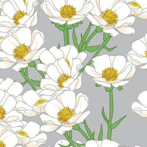 Mount Cook Buttercup Flowers on Grey